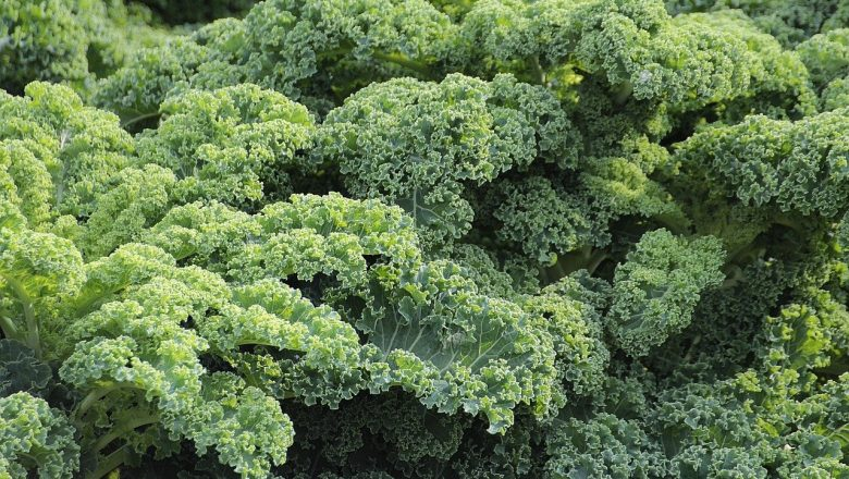 Why Eating Kale is Good for Your Health