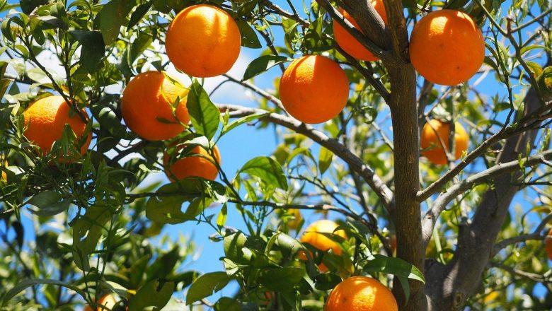 Är det Farligt att Äta för Mycket Apelsiner?
